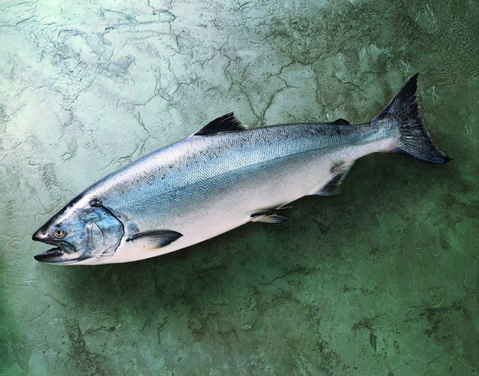 crs-img-mkt-king-salmon-whole.jpg