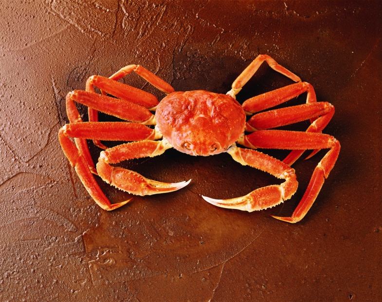 crs-img-mkt-snow-crab-whole.jpg